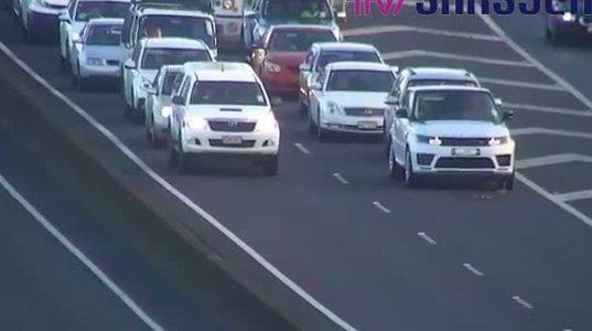 ახალ ზელანდიაში იხვის  ჭუჭულებს მანქანებმა გზა დაუთმეს