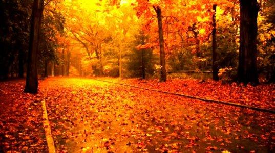 როგორ  უხდება შემოდგომის  მზიან დილას  ეს მელოდია Cecile Bredie - The Autumn Leaves