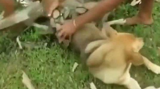 ძაღლი გველისგან იხსნეს