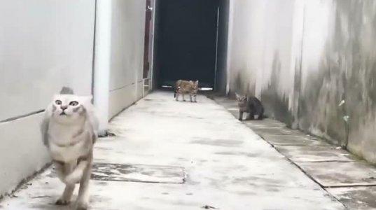 ნინძა კატა