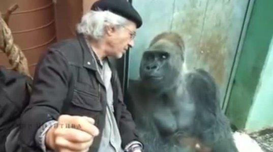 დიალოგი ადამიანსა და მაიმუნს შორის: ჩვენთან ცხოვრება გაჭირდა ძმაო, მერე გადმოდი ჩემთან ვოლიერში
