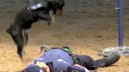 ძაღლი, რომელსაც შეუძლია ადამიანის სიცოცხლე იხსნას