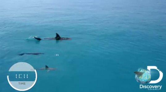 მსოფლიო დონის მოცურავე თეთრ ზვიგენს ცურვაში შეეჯიბრა