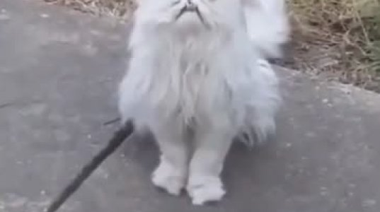 უცნაური გარეგნობის კატა