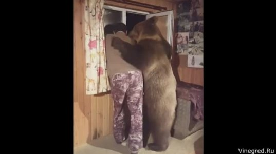 მოსკოვის ოლქში პანტელეენკოების ოჯახში 2 წლის დათვი ცხოვრობს