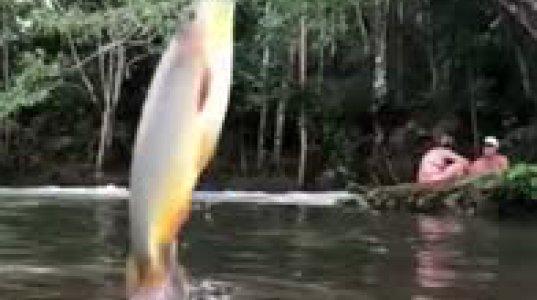 ეს თევზია თუ პიდბული, ნახეთ რას აკეთებს