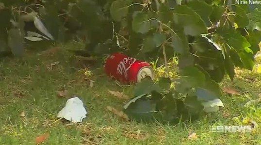 შუაზე გახლეჩილი ხის დაცემას მამამ ორი შვილი სიკვდილს გადაარჩინა