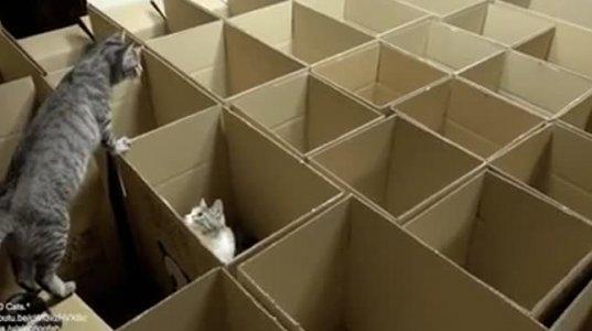 ნამდვილი სამოთხე კატებისთვის