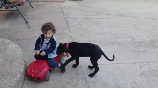 """სცადეთ და არ გაიცინოთ ანუ როგორ აუღო პატარამ """"აბაროტი"""" აბეზარ ძაღლს"""