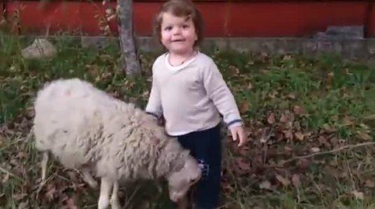 ბავშვისა და ცხვრის თამაშის ქართული ვიდეო მსოფლიო ჰიტად იქცა