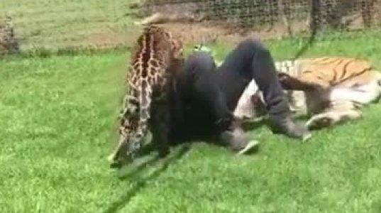 """მამაკაცს უზარმაზარი მოშინაურებული ცხოველები """"დაესხნენ"""" თავს"""