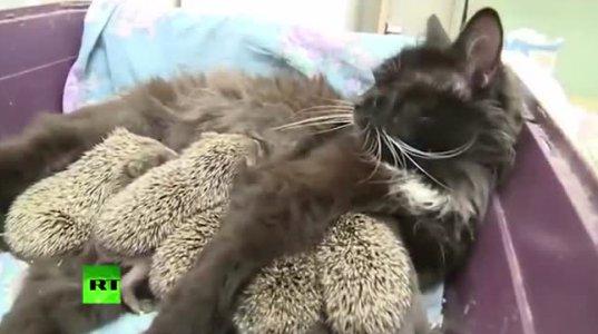 კატა ზღარბების ძიძა