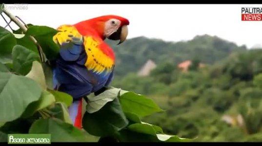 ყველაზე ძვირად ღირებული თუთიყუში, რომელიც პრესტიჟისა და ფუფუნების სიმბოლოა