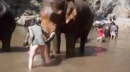 სპილო ფისო არაა მოეფერო, სპილომ ახალგაზრდა ქალი მოფერებისას შორს მოისროლა