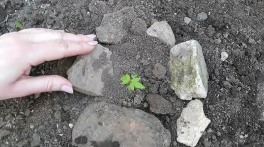 ჩამარხეთ კვერცხი მიწაში და და დააკვირდით რა ამოვა და გაიზრდება
