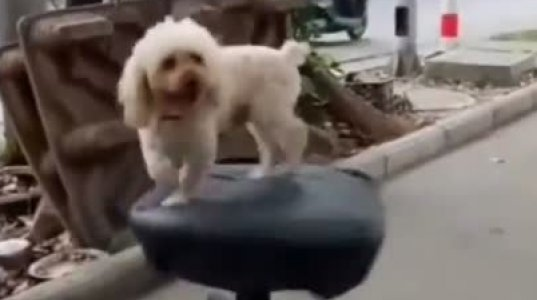 ძაღლი რაკარგად ერთობა