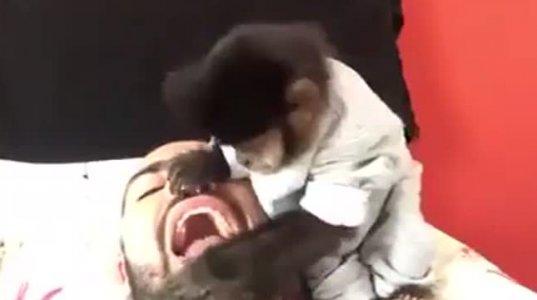 სტომატოლოგი მაიმუნი
