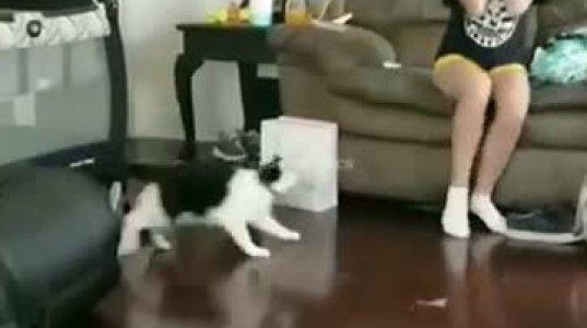კატამ ცემა