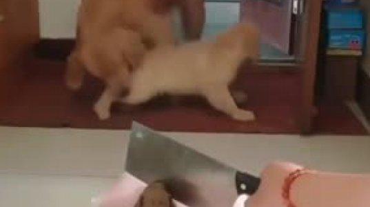 ძაღლს რამაგრად შეეშინდა