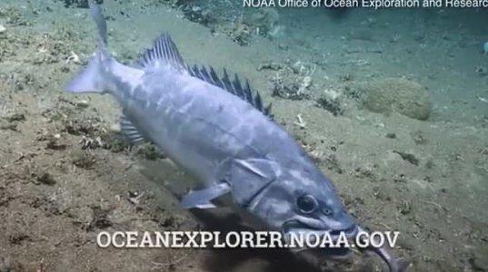 მგონი თევზს პირში გველი უჭირავს ოკეანეში