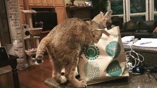 გოგნამ უცნაური კატა შეიფარა. დილით კი სიმართლე შეიტყო!