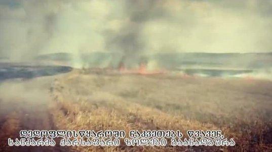 მასშტაბურმა ხანძარმა დედოფლისწყაროში ქარსაფარი ზოლები გაანადგურა (ვიდეო)