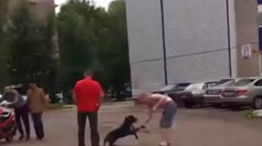 """პიტბული სამი წლის გოგონას თავს დაესხა-პატრონმა კი ძაღლს """"ახსნა-განმარტებითი"""" გაკვეთილი ჩაუტარა(რუსეთი)"""