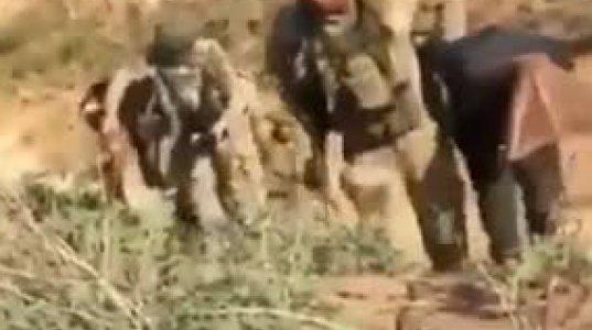 თურქი სამხედროების სისასტიკე მშვიდობიანი ქურთების მიმართ სირიაში