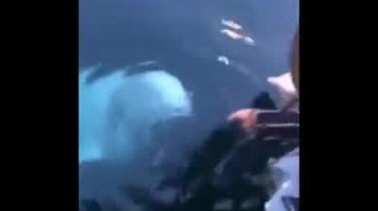 წყალში  ჩავარდნილი  ტელეფონი პატრონს  თეთრმა  დელფინმა ამოუტანა
