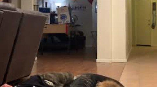 პატრონმა ძაღლების თვალწინ თავი მოიმკვდარუნა-ნახეთ ძაღლების რეაქცია