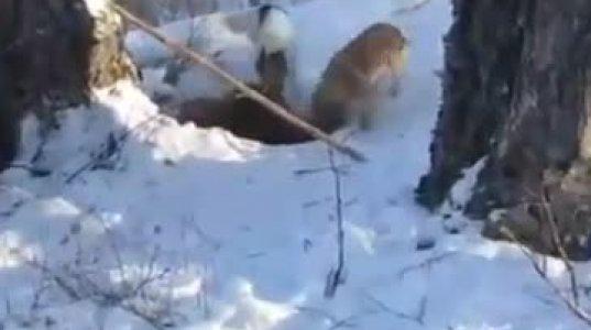 სირცხვილია ზამთარში ძილსმიცემულ დათვს ჯოხი უჩუჩხუნო, გააღვიძო, გამოაგდო და ტყვია დაახალო