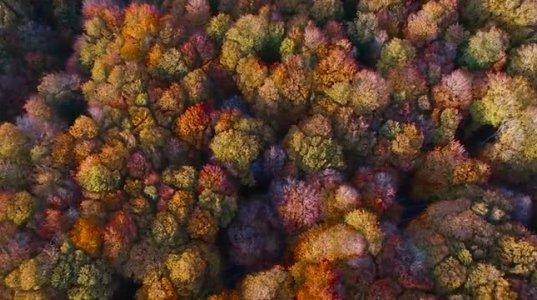 ულამაზესი საბადურის ტყე