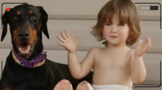 პატარა გოგონა თამაშობდა დობერმანთან, შემდეგ მომხდარმა კი ყველა გააოცა