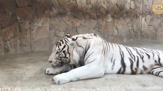 ტოპ 25 ცხოველი ყველაზე ძლიერი კბენის ძალით