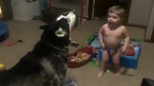 ძაღლს აჯავრებს
