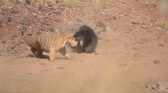 ყველაზე წარმოუდგენელი ცხოველთა ბრძოლები ტყვედ კამერა