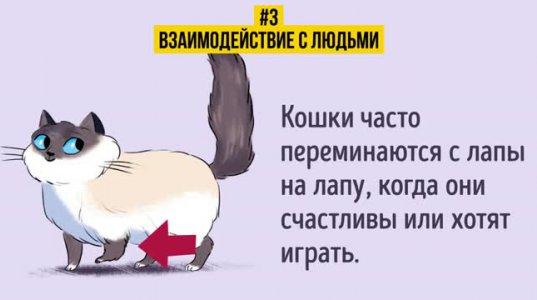 როგორ ვიპოვოთ საერთო ენა - საკუთარ კატასთან