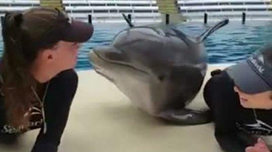 მეტიჩარა დელფინი