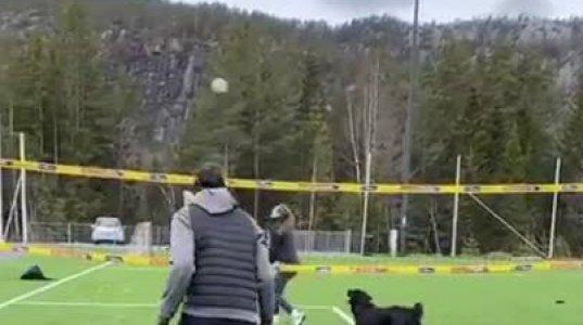 ძაღლი ფრენბურთს თამაშობს