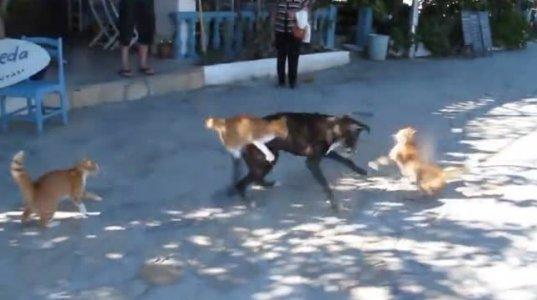"""კატებმა ძაღლს """"დაუსატკავეს"""""""