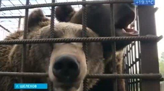 გალიაში გამომწყვდეულმა დათვმა ხელი  მოაგლიჯა კაფე-ბარის სტუმარს