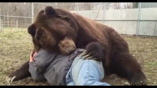 ამ კაცზე ნორმალურიაო, რომ იტყვის ისაა სამკურნალო ანუ დაწოლილი მთვრალი და დათვი