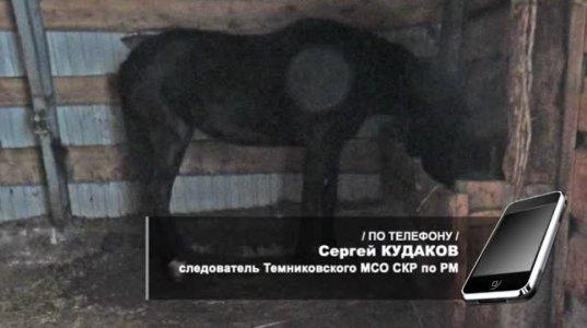 მკვლელი  ცხენია- დასკვნა  ასეთია
