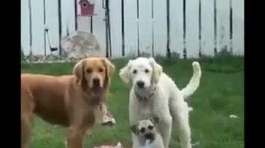 უსაყვარლესი ცხოველების სასაცილო ვიდეოების ნაკრები 2020