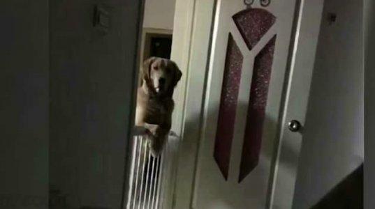 ძაღლს ღამე არასოდეს  ეძინა, იჯდა კარებთან და პატრონს უყურებდა. მიზეზი გულს  ჩაგწყვეტთ