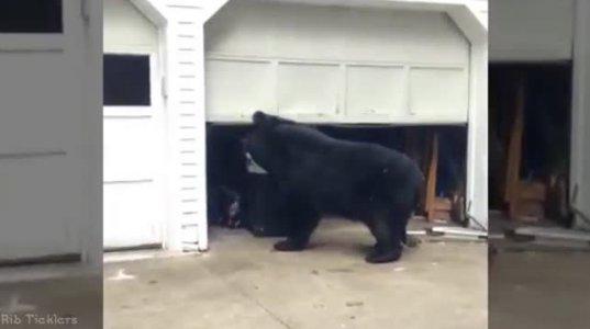 რას იზამთ დათვმა სახლში რომ მოგაკითხოთ დაუკითხავად?