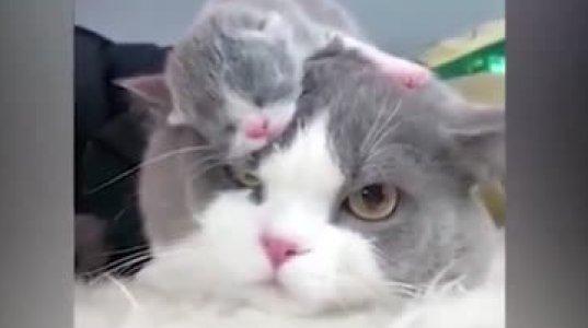 საოცარი არსებაა კატა, კნუტები კი საოცრად მკვირცხლები და თამაშის მოყვარულები
