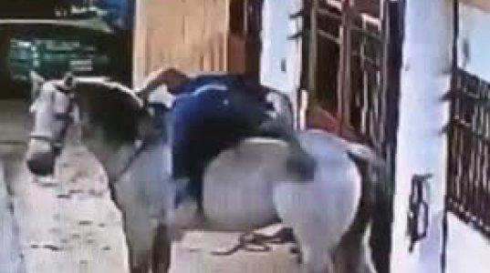 """ბოროტი არა ვარ, მაგრამ გულიანად ვიცინე ამ """"ლაყეზე"""", ცხენზე შეჯდომა ასწავლეთ ვინმემ"""