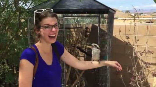 როგორი მხიარული ჩიტია, გადავირიე