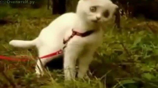 """""""დაბოლილმა"""" კატამ გაჭედა"""